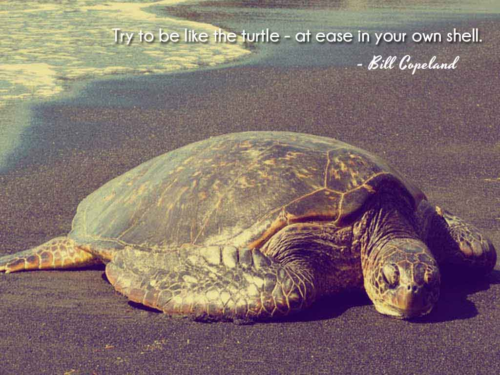 Inspirational Quotes About Turtles