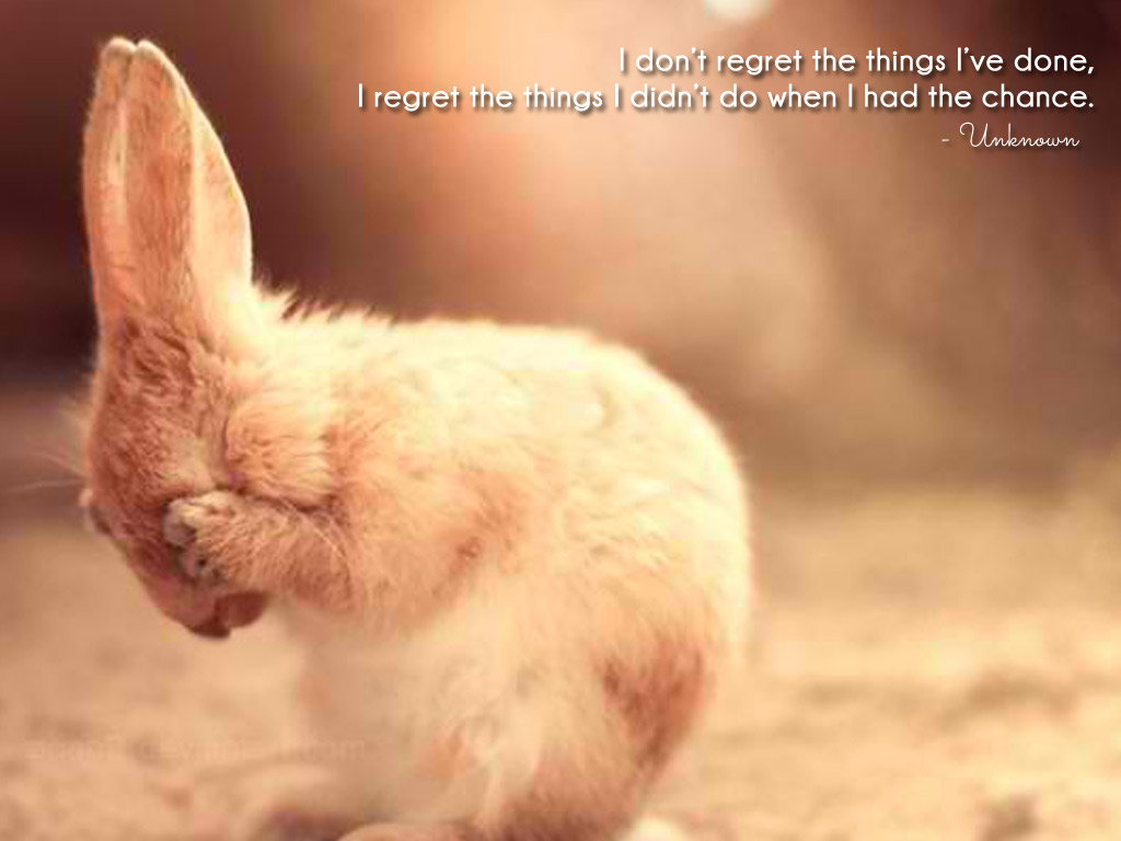 """Kết quả hình ảnh cho """"I don't regret the things I've done, I regret the things I didn't do when I had the chance."""" – Unknown"""
